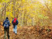 As pessoas vão ao longo da estrada através da floresta amarela — Fotografia Stock