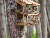 Starling house for birds in a forest — Stock Photo