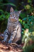 шесть носками кошка в доме хемингуэя в ки-уэст — Стоковое фото