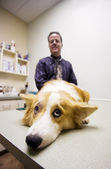 Dog in a veterinary office — Stock Photo