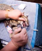 Veterinary Dentistry — Stock Photo