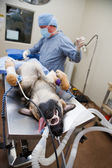 Canine Surgery — Stock Photo
