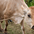 Stock Photo: CostRiccow