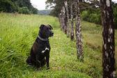 Wachsamen hund — Stockfoto