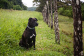 Watchful dog — Stockfoto