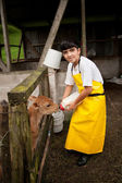 Young boy working on Costa Rican dairy farm — Foto Stock