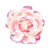 Pink rose. — Stock Vector