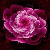 Dark pink fractal flower pattern — Stock Photo