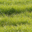 Green grass in a field — Stock Photo