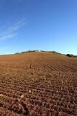 поля фермы — Стоковое фото