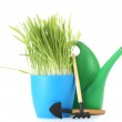 Beautiful grass in a flowerpot, watering can and garden tools isolated on white — Stock Photo #11908761