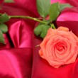 Beautiful rose on red cloth — Stock Photo #12317486