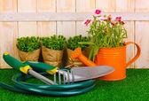 Attrezzi da giardinaggio su fondo in legno — Foto Stock