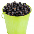 Black currant in metal bucket isolated on white — Stock Photo #12567262