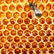 Yellow beautiful honeycomb with honey and bee, background — Stock Photo #12568019