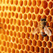 Yellow beautiful honeycomb with honey and bee, background — Stock Photo #12568025