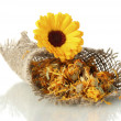 Dried and fresh calendula flowers in sacking, isolated on white - Stock Photo