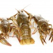 Stock Photo: Alive crayfishes isolated on white background