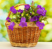 Blue bell flowers in basket on wooden table on green background — Stock Photo