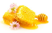 Golden honeycombs, wildflowers and wooden drizzler with honey isolated on w — Stock Photo