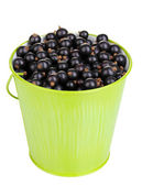 Black currant in metal bucket isolated on white — Stock Photo