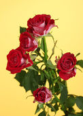 Beautiful vinous roses on yellow background close-up — Stock Photo