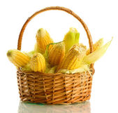 Fresh corn in basket, isolated on white — Stock Photo