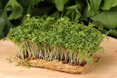 Fresh cress salad on wooden board — Stock Photo