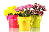 Beautiful bouquet of chrysanthemums in a bright colorful buckets isolated o — Stock Photo