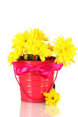 Beautiful bouquet of chrysanthemums in a bright colorful bucket isolated on — Stock Photo