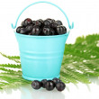 Ripe blueberries in blue bucket on fern close-up — Stock Photo #12575304