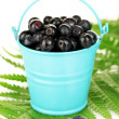 Ripe blueberries in blue bucket on fern close-up — Stock Photo #12575306