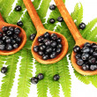 Tasty blueberries in wooden spoons on fern close-up — Stock Photo #12575311
