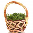 Stock Photo: Fresh garden cress on basket isolated on white