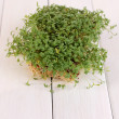 Stock Photo: Fresh garden cress close-up on wooden table