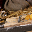 Mousetrap with a piece of cheese in barn close-up on wooden background — Stock Photo