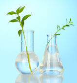 Test-tubes with a transparent solution and the plant on blue background clo — Stock Photo