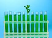 Tubos de ensayo con una solución verde y la planta en primer plano de fondo azul — Foto de Stock