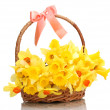 Beautiful yellow daffodils in basket with bow isolated on white — Stock Photo