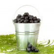 Ripe blueberries in silver bucket on fern close-up — Stock Photo #12645832