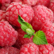 Ripe raspberries background with mint — Photo