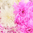 A bouquet of bright chrysanthemums close-up — Photo