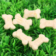 Dry bone-shaped food for dogs on green grass — Photo