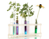 Test-tubes with a colorful solution and the plant isolated on white backgro — Stock Photo