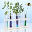 Test-tubes with a colorful solution and the plant on blue background close- — Zdjęcie stockowe