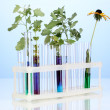 Test-tubes with a colorful solution and the plant on blue background close- — Photo