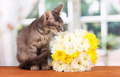 Mały szary kotek z kwiatami na drewnianym stole na tle okna — Zdjęcie stockowe
