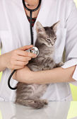 Veterinarian examining a kitten on green background — Stock Photo