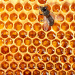 Yellow beautiful honeycomb with honey and bee, background — Stock Photo #12712031