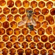 Yellow beautiful honeycomb with honey and bee, background — Stock Photo #12712036